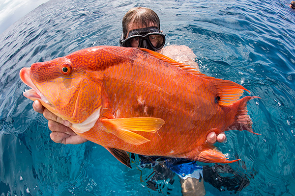 Diver showing large colorful fish